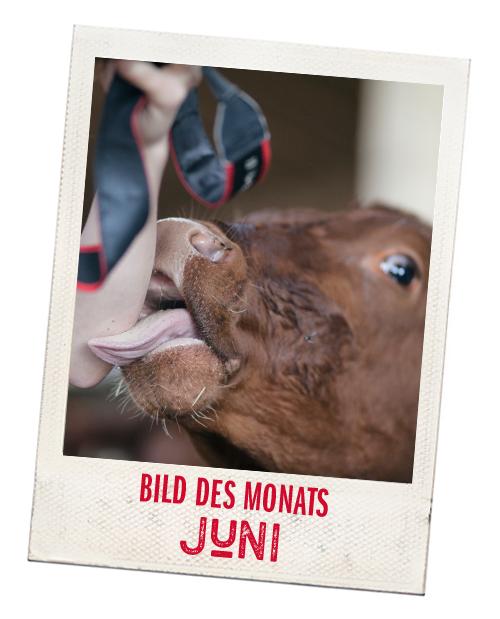 TEASER_STARTSEITE_Bild-des-Monats_Juni